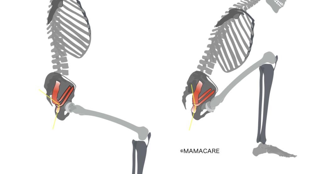 肛門直腸角